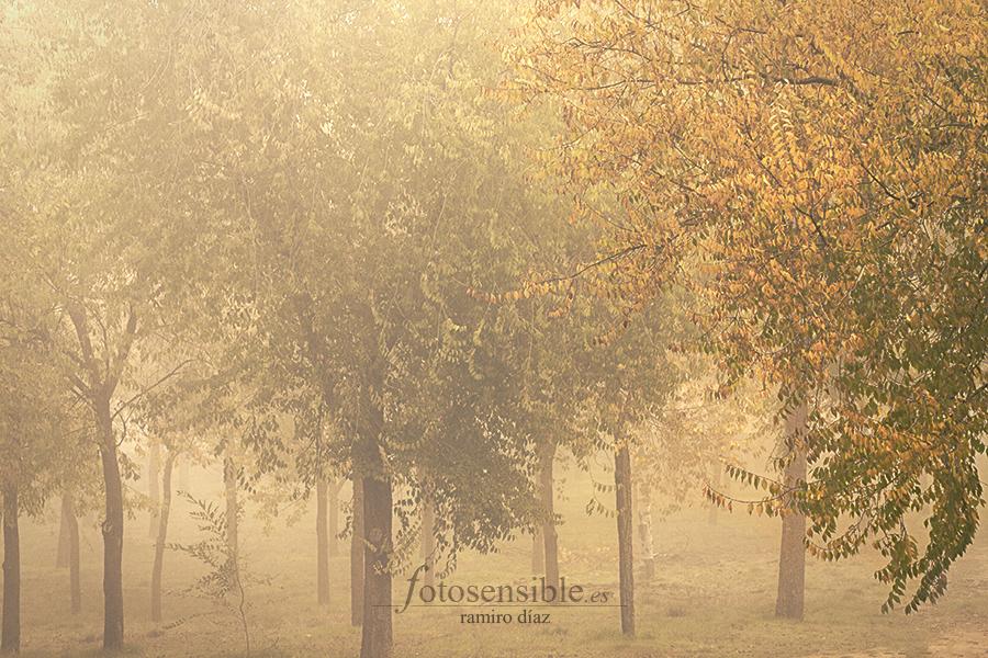 La niebla y el otoño son estupendos ingredientes para los cuentos.