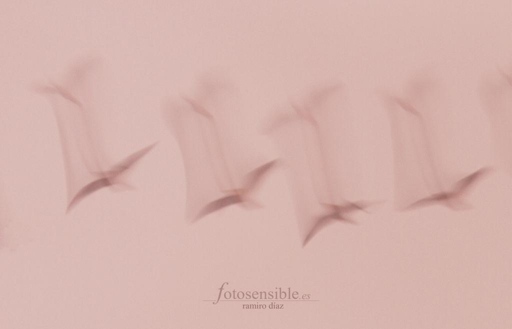 Miles de gaviotas pintan mis cielos cada atardecer.