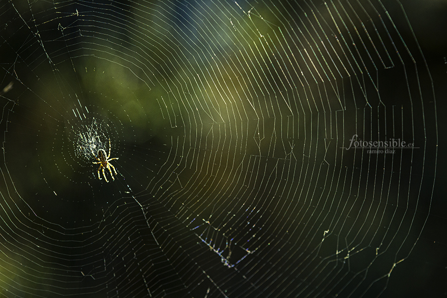 Increíble trabajo artesano de la araña hoja de roble!