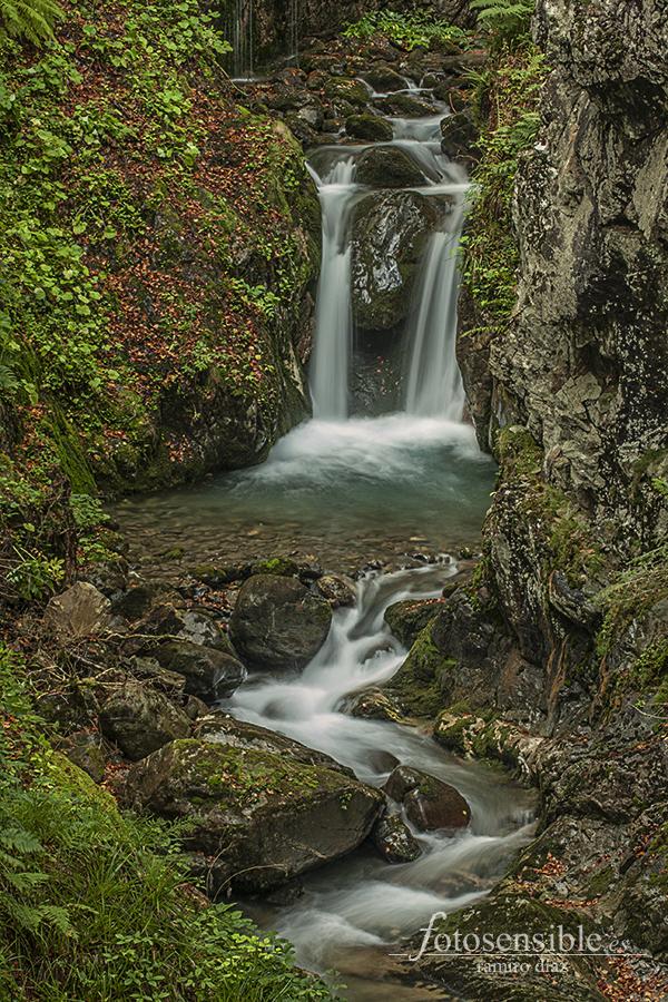 Entre dos aguas. Impresionante frondosidad y frescor del bosque atlántico.