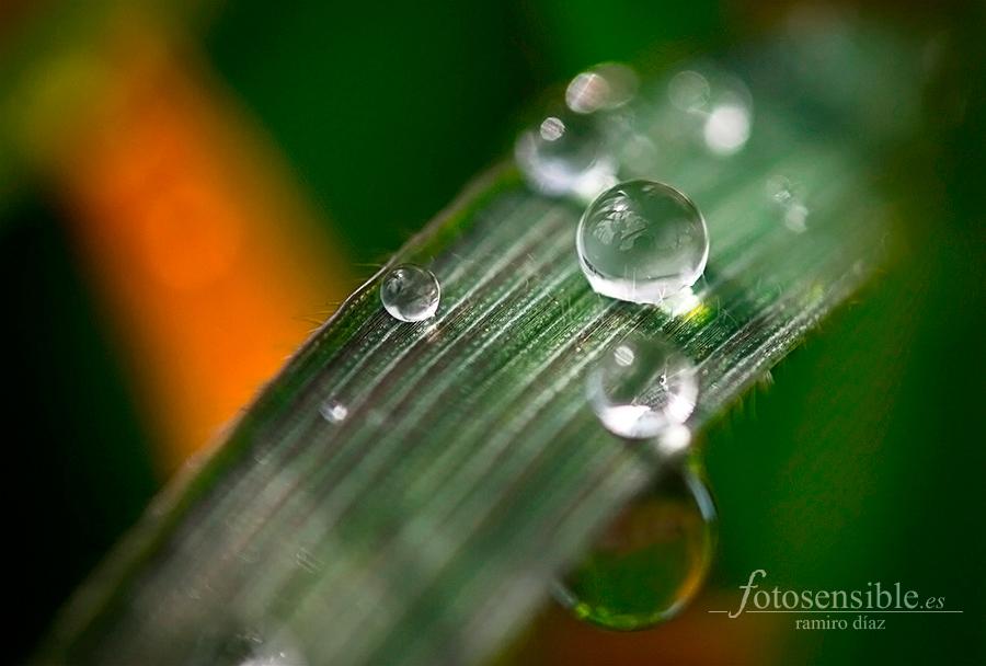La vida puedes ser maravillosa hasta en una brizna de hierba...