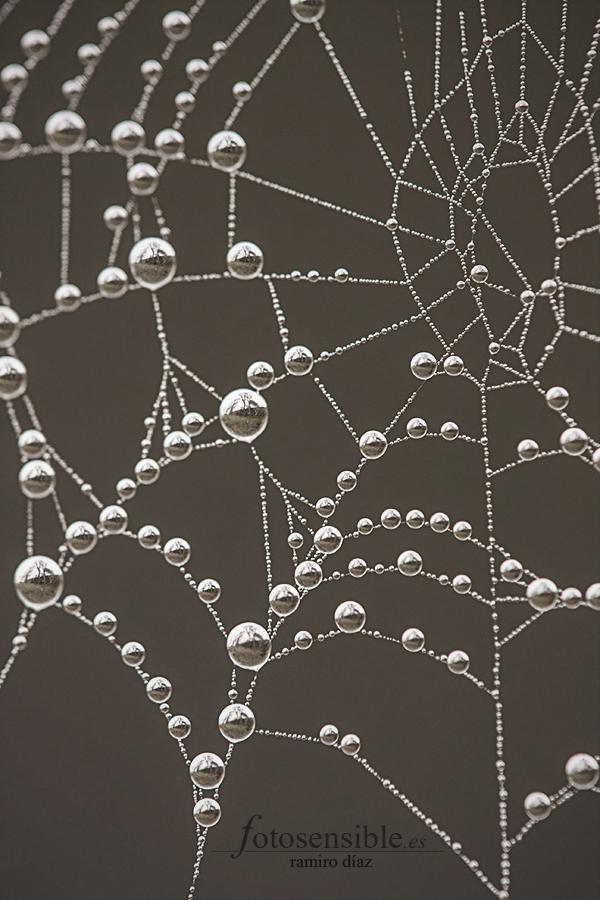 Gotas de niebla atrapadas en una tela simétrica temprano.