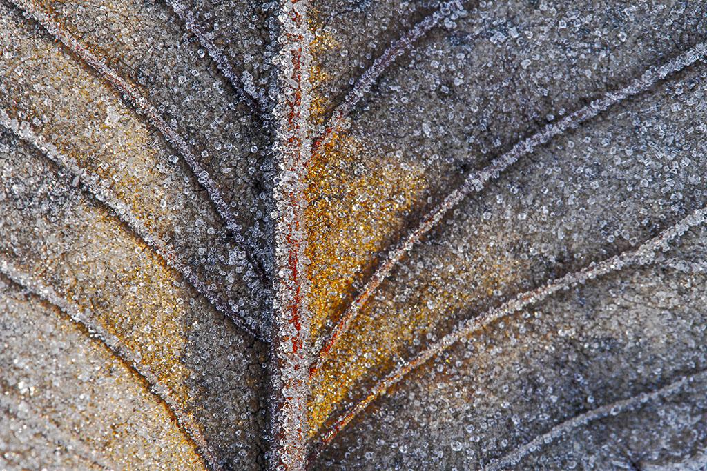 Homenaje a Seurat. Buscando paisajes en las hojas escarchadas del parque, en las frias mañanas de diciembre.